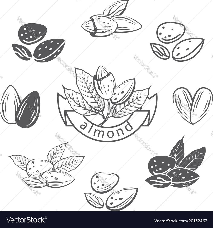 Almond images set