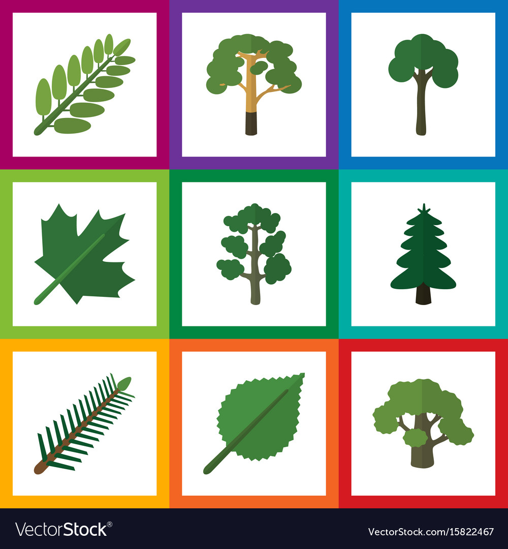 Flat icon bio set of tree linden oaken and other