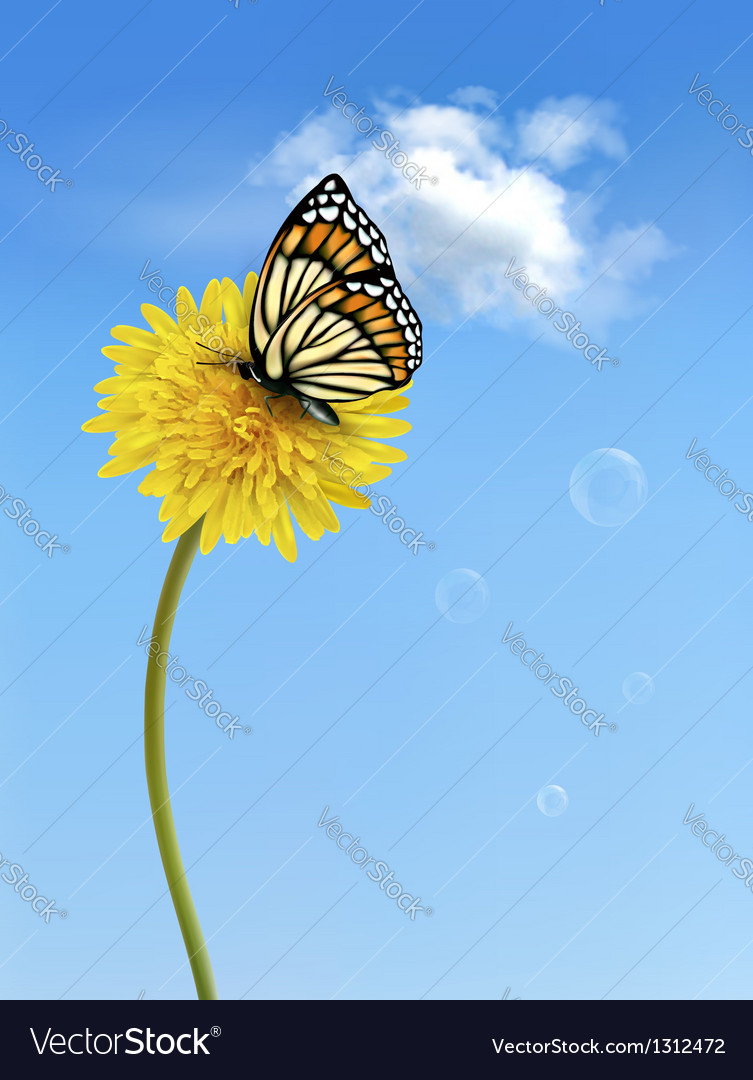 Nature background with butterfly on a yellow
