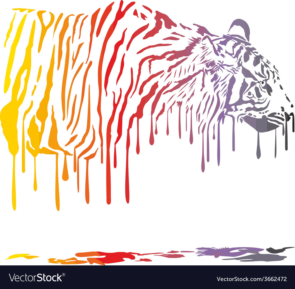 Tiger abstract color painting on a white vector image