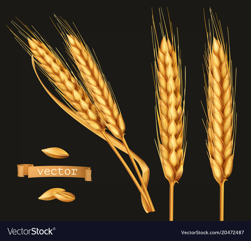 Ears of wheat 3d icon set on black