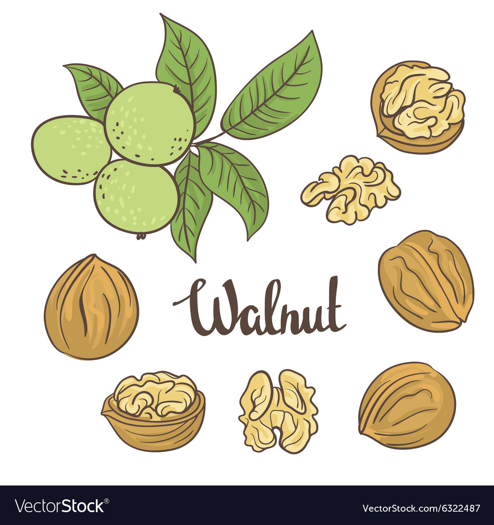 Green walnuts with leaves and dried walnuts