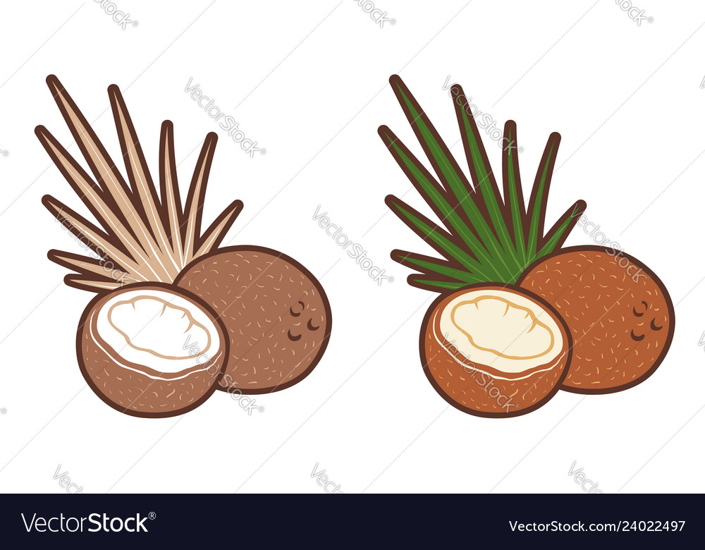Set icons of coconut with palm leaf retro