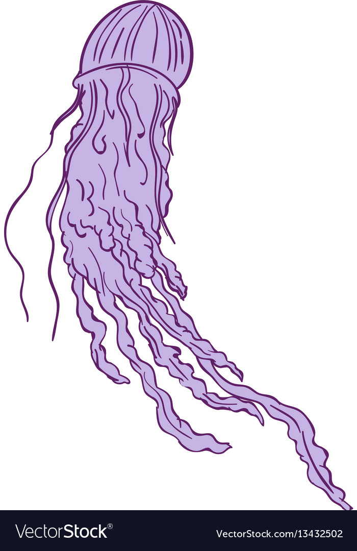 Australian box jellyfish drawing vector image