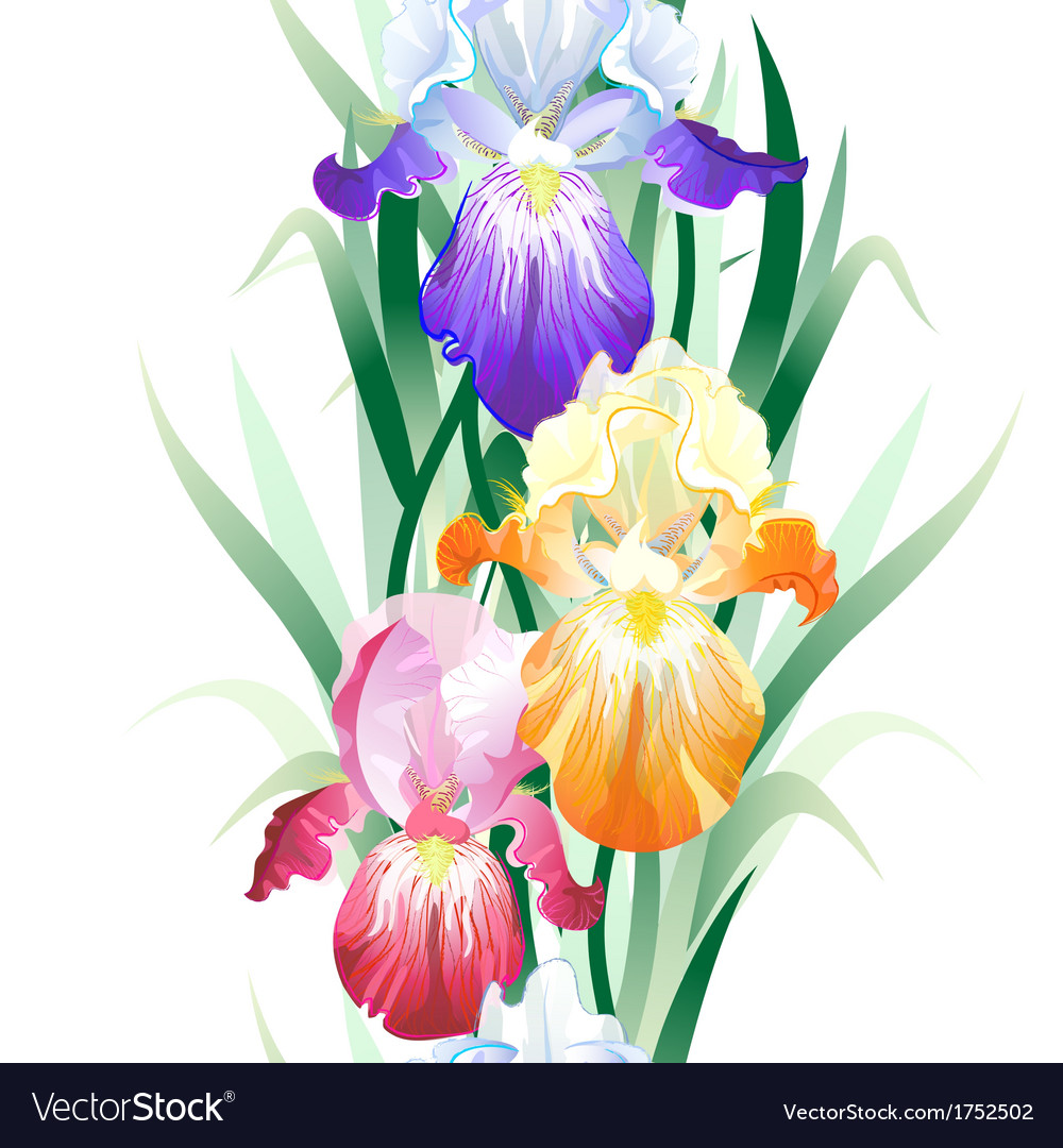 Seamless Pattern With Iris Flowers Royalty Free Vector Image