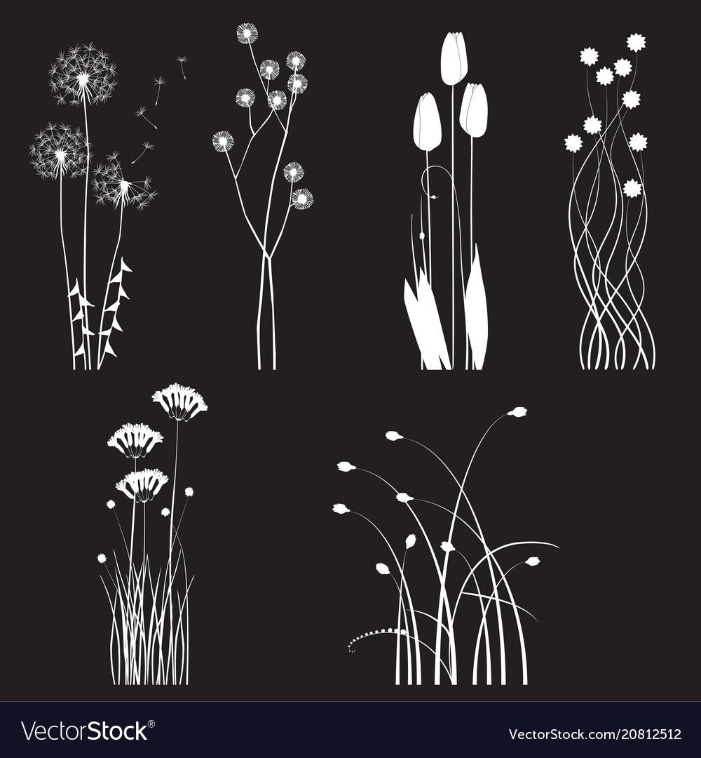 Blooming wild flowers separated on black
