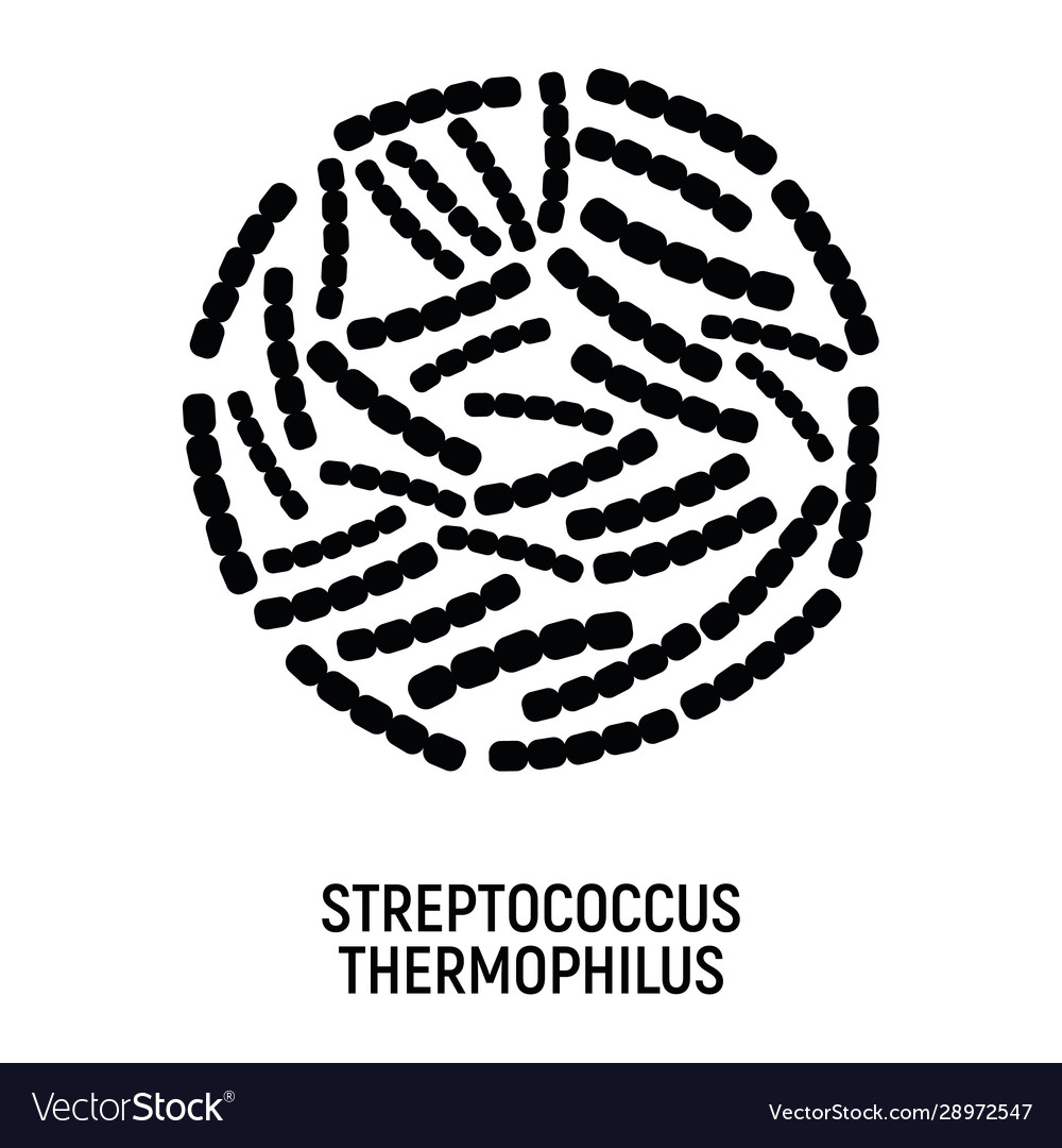 Streptococcus thermophilus icon probiotic concept
