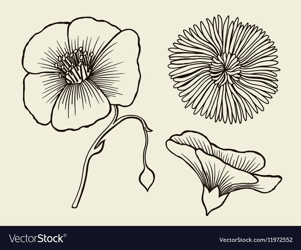 Hand drawn sketch flowers