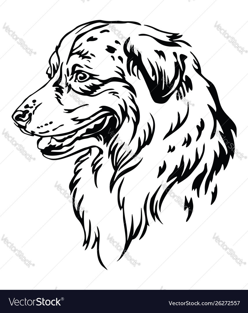 Australian Shepherd Cliparts, Stock Vector And Royalty Free ...   1080x857