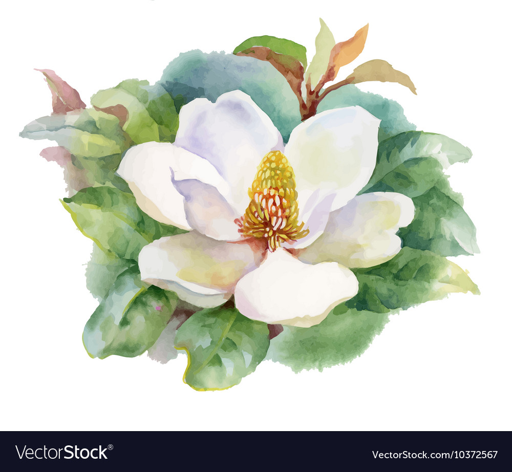 Watercolor Summer blooming white magnolia flower