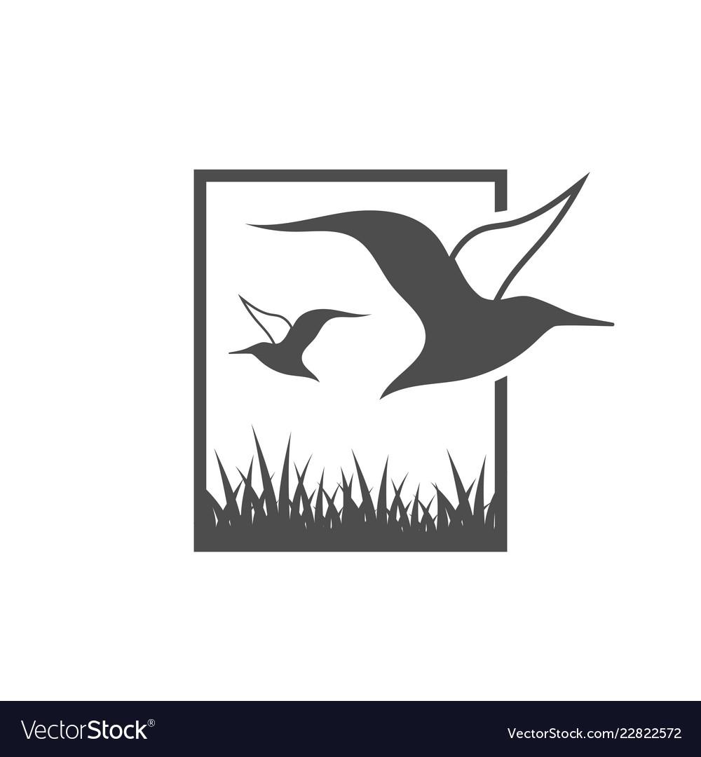 Albatross bird graphic design template