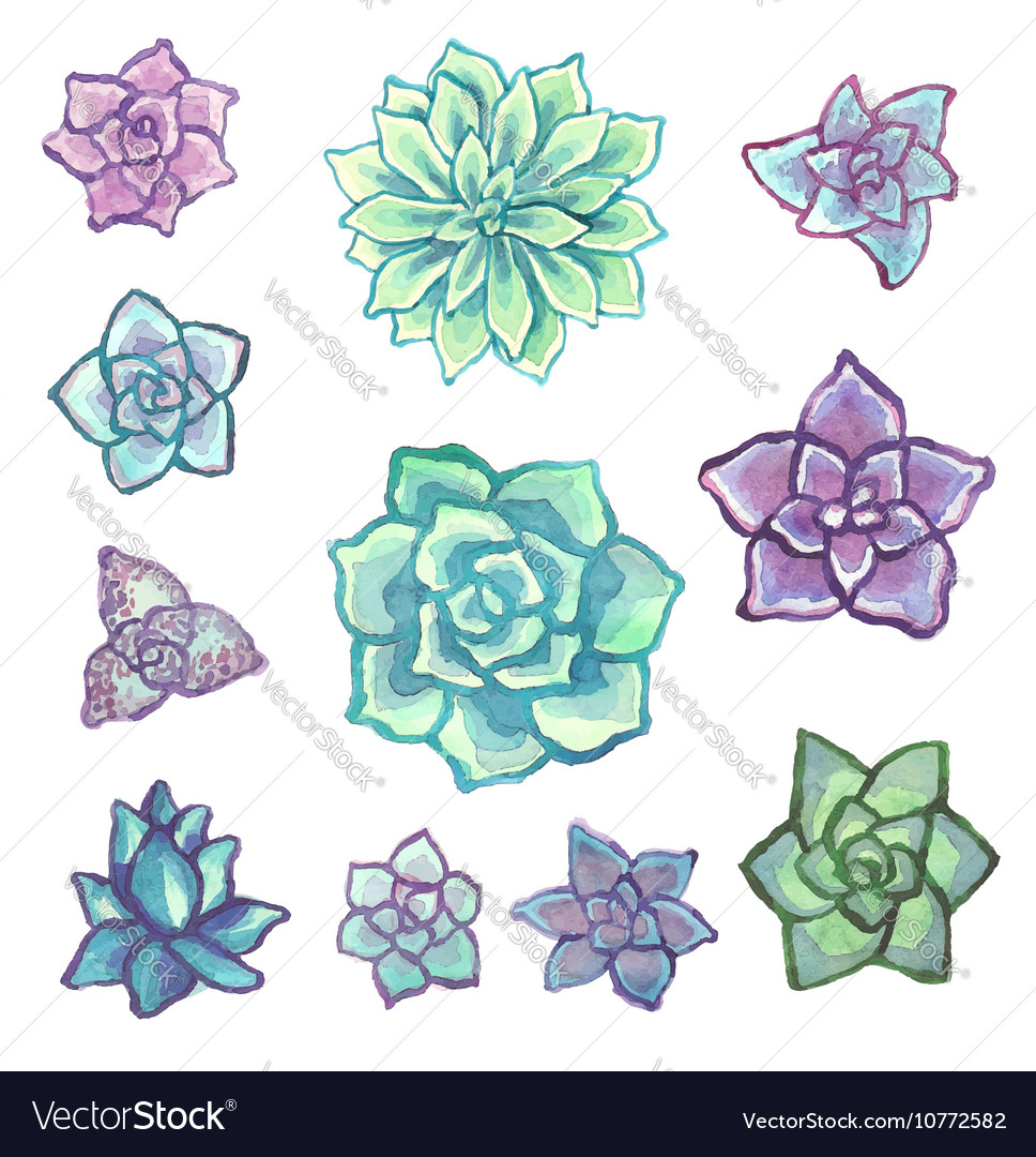 Watercolor Succulent Set On White Background Vector Image