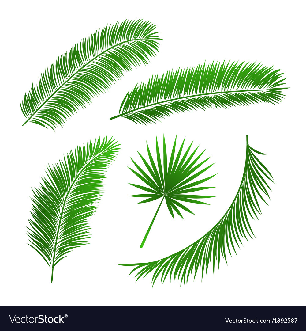 Collection Of Palm Tree Leaves Royalty Free Vector Image
