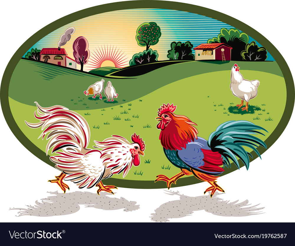 Oval frame with hens and two roosters fighting Vector Image