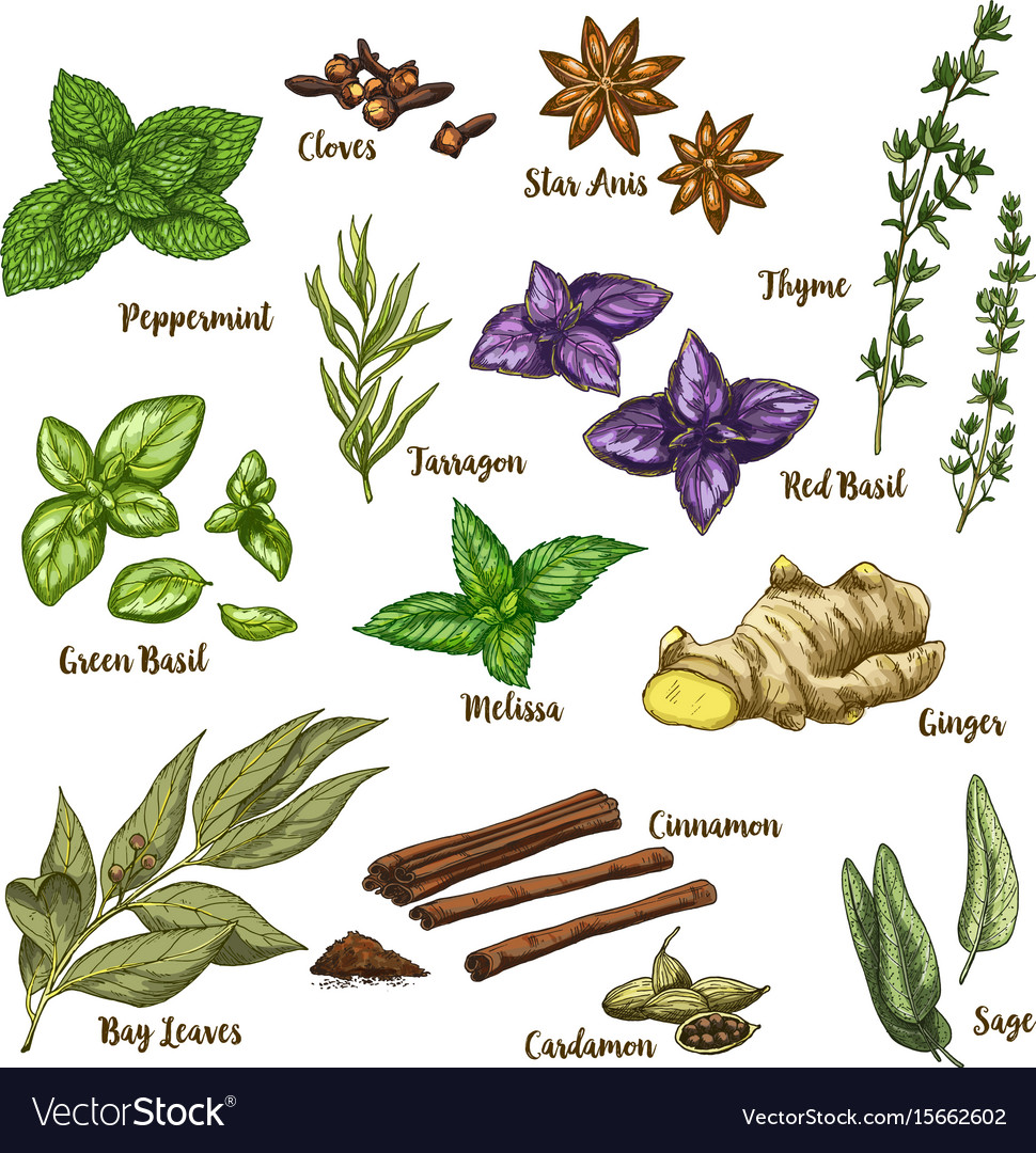 Full color of herbs and spices vector image