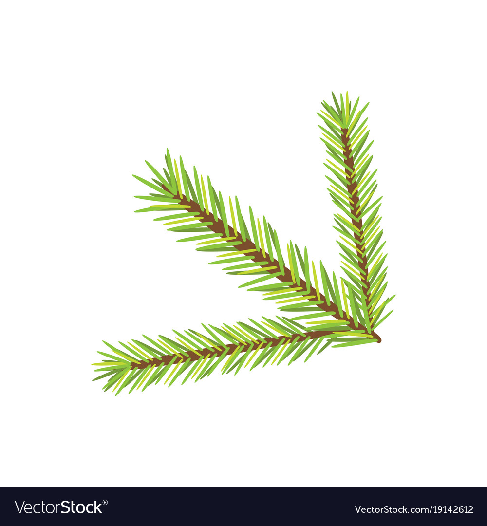 Christmas tree branch isolated new year