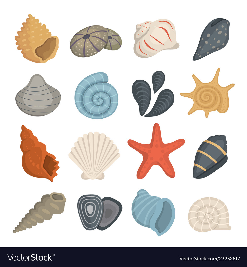 Sea shell icons in cartoon style set of