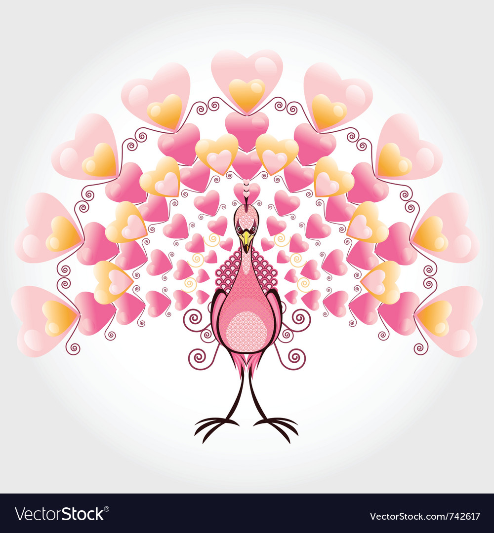 Valentine love bird peacock vector image