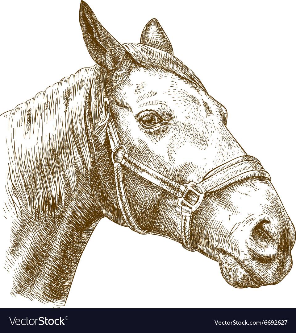 Engraving horse head vector image