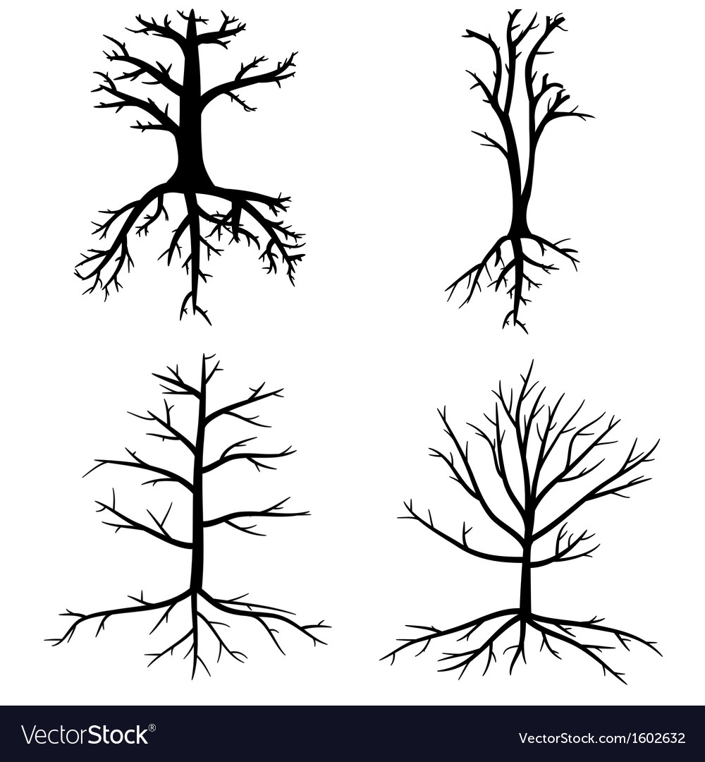 Trees with dead branches and roots vector image