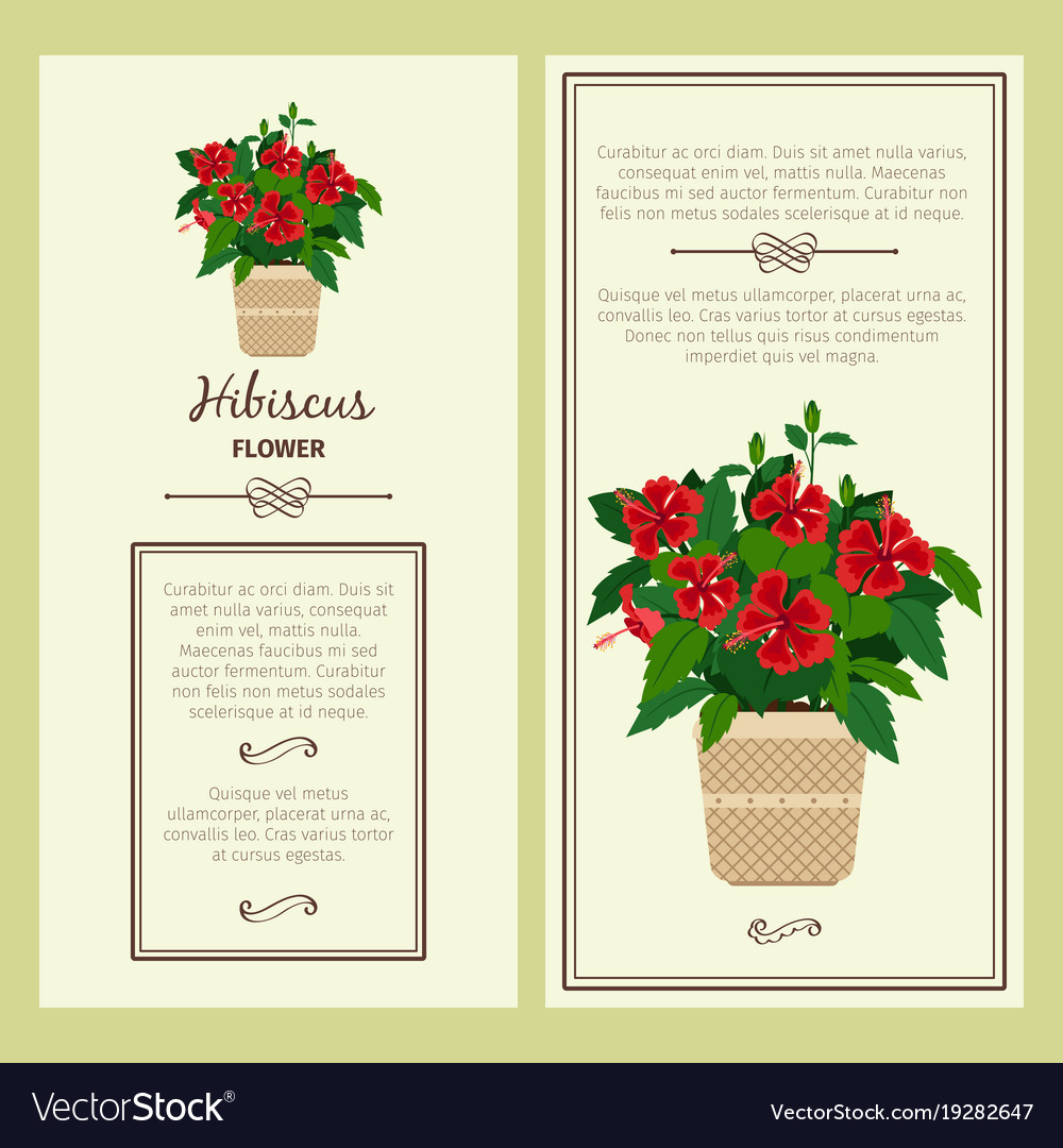 Hibiscus flower in pot banners
