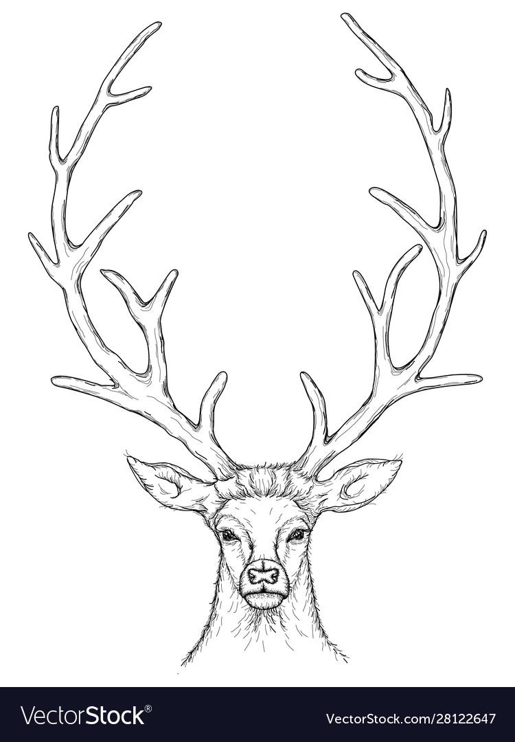 Sketch beautiful deer