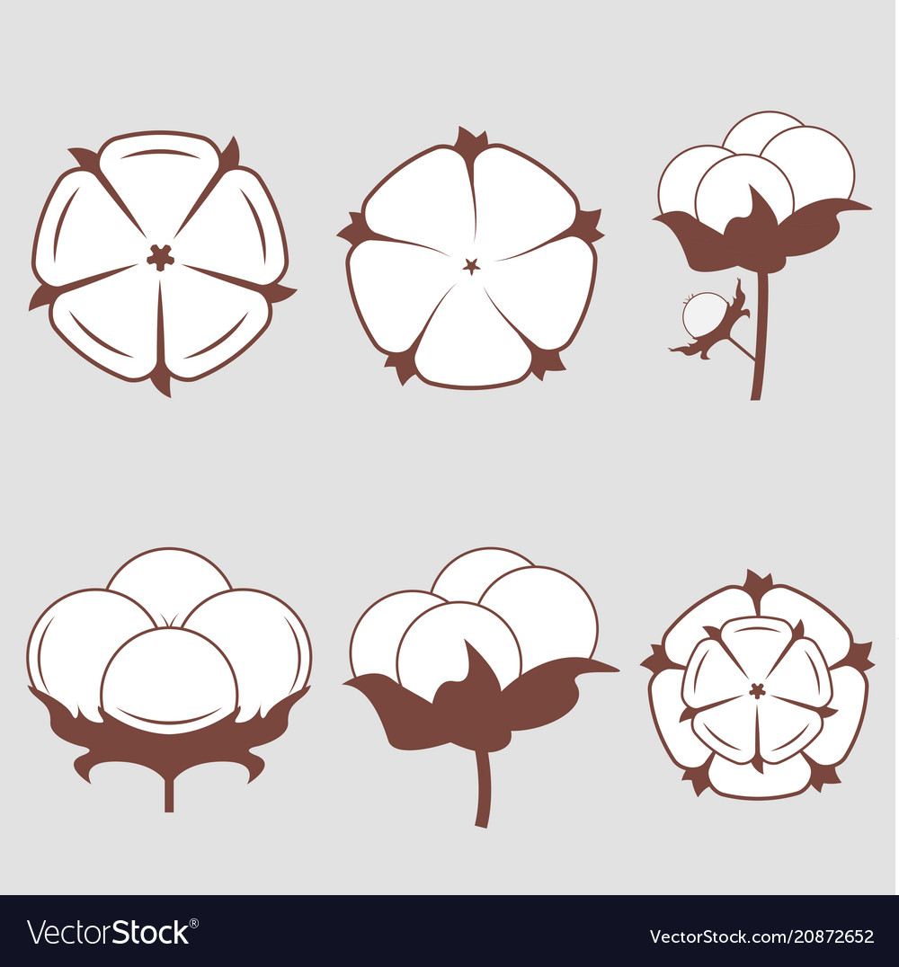 White cotton flowers vector image