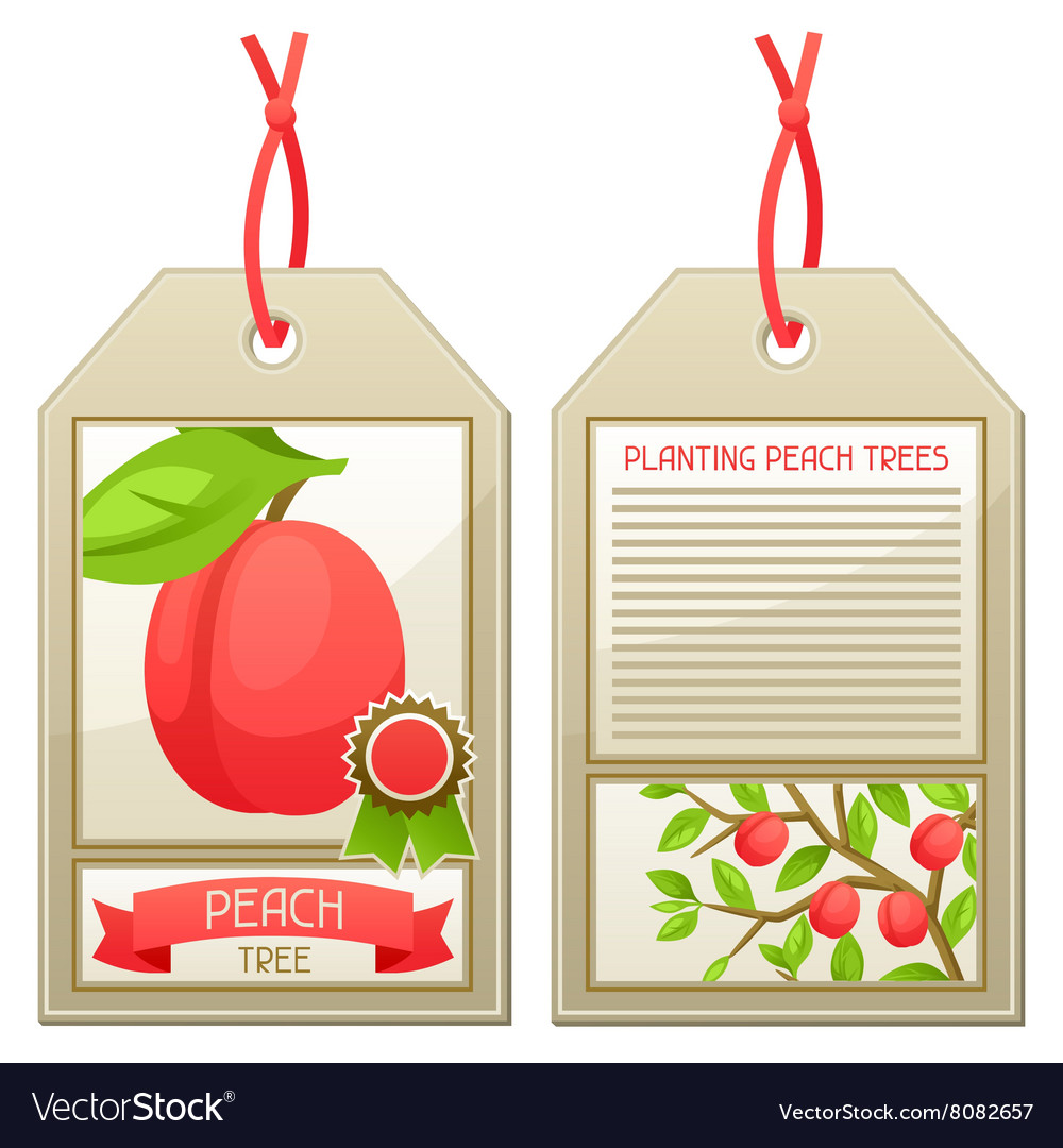 Sale tag of seedlings peach trees Instructions vector image