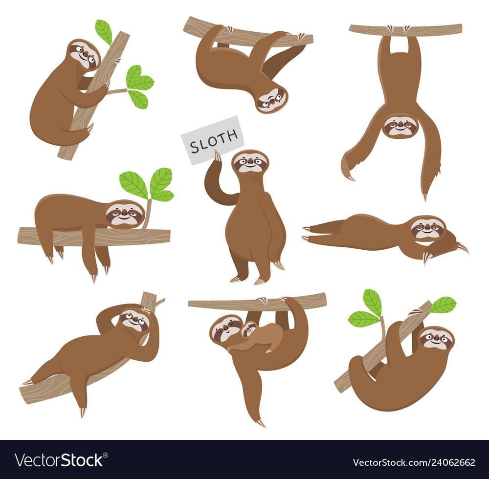 Sloth cute baby animal sloths hanging on tree