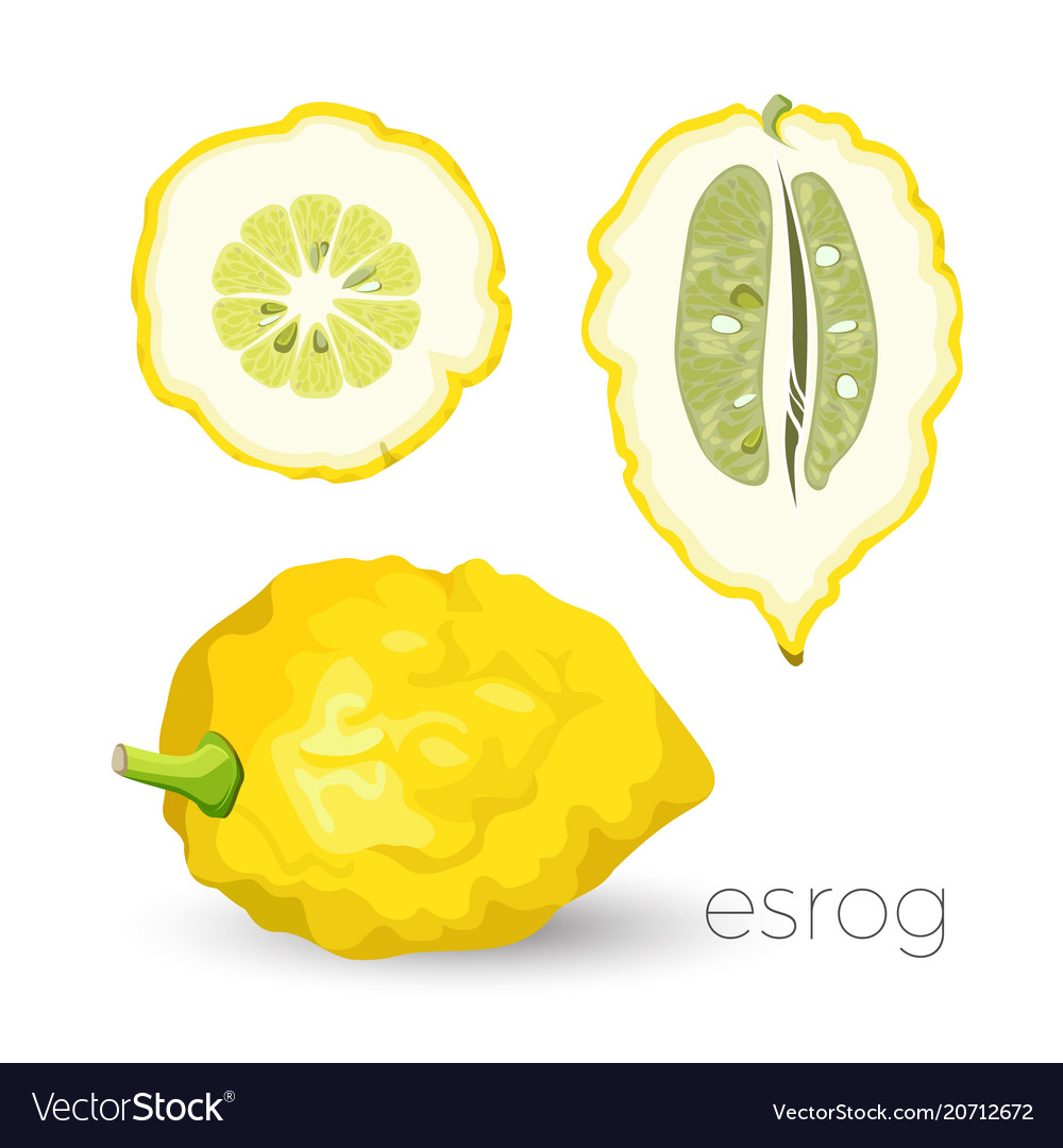 Delicious exotic sour esrog fruit with rough skin