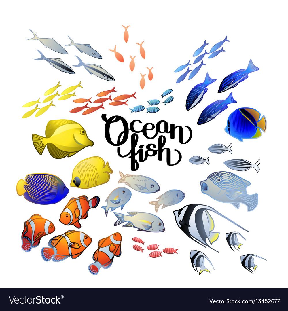 Graphic ocean fish vector image