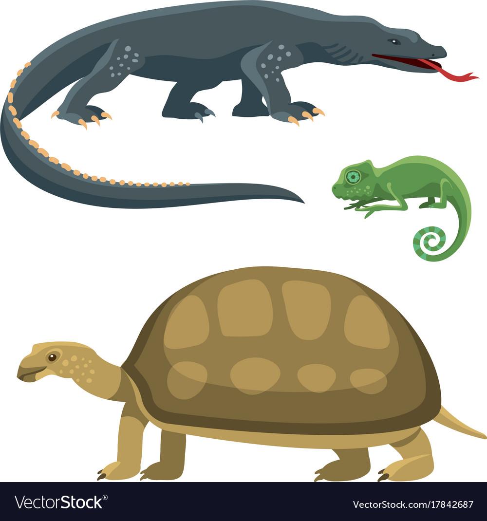 Reptile and amphibian colorful fauna