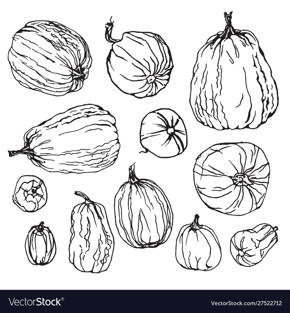 Various pumpkins botanical hand drawn set