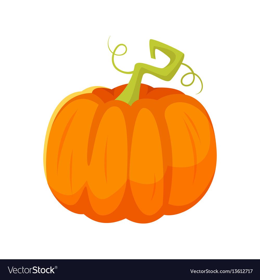 Cartoon style of pumpkin