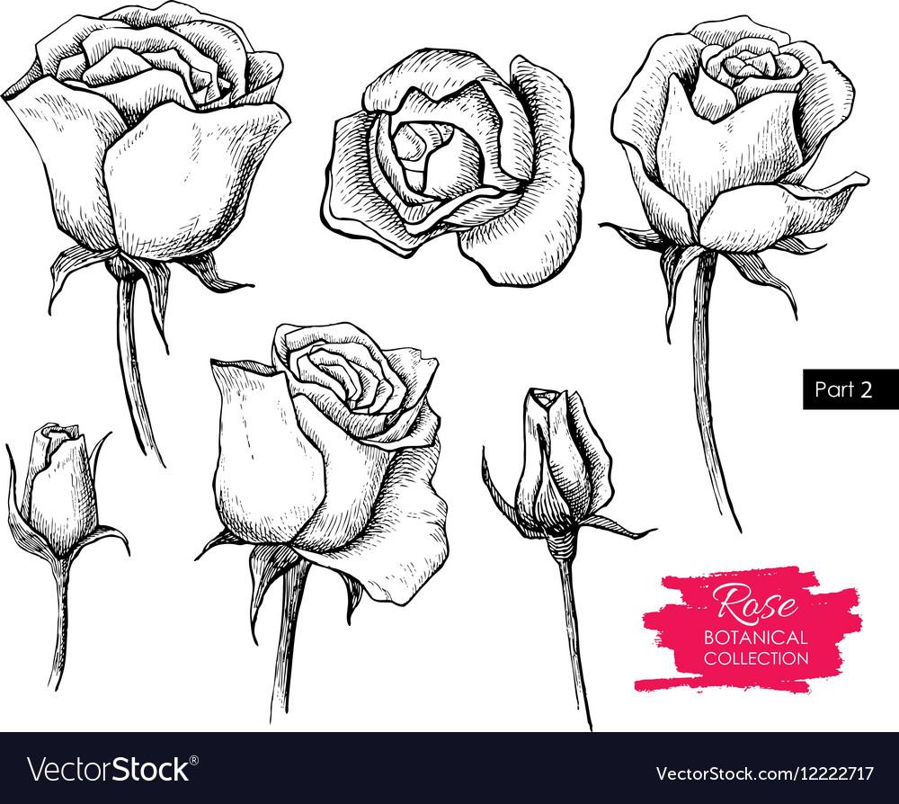 Hand drawn botanical rose set Engraved