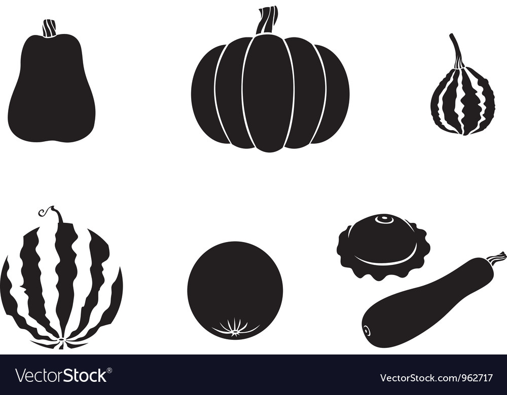 Melons vector image
