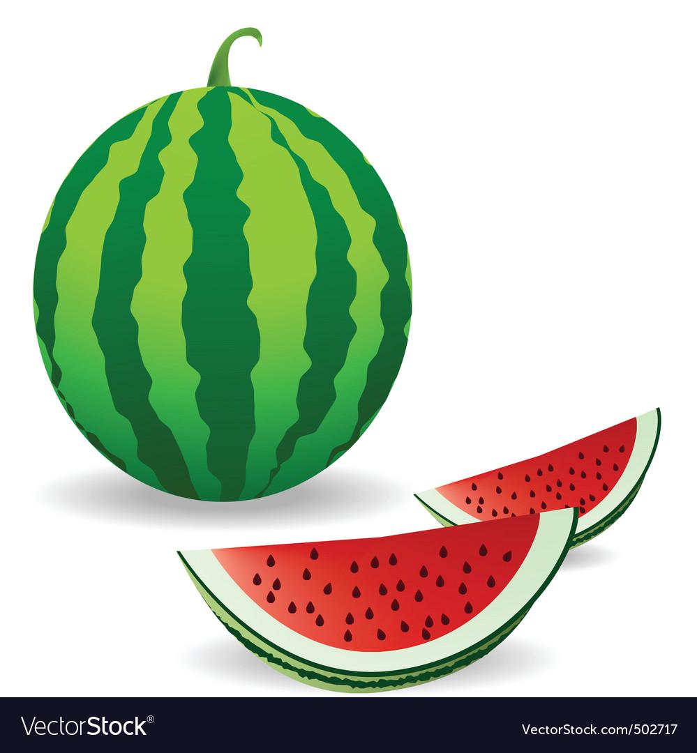 watermelon royalty free vector image vectorstock rh vectorstock com watermelon vector black and white watermelon vector art free