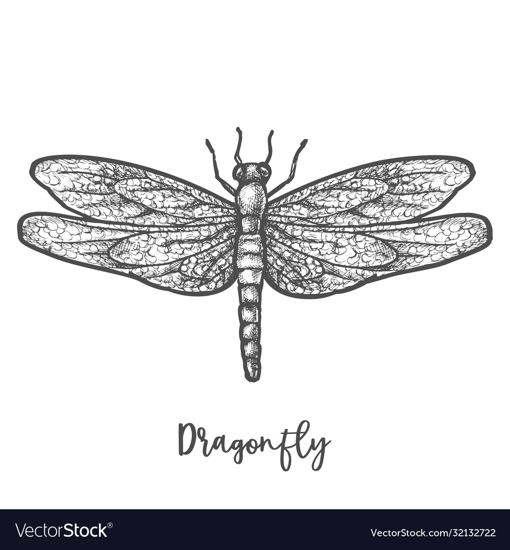 Engraved dragonfly or flying insect sketch