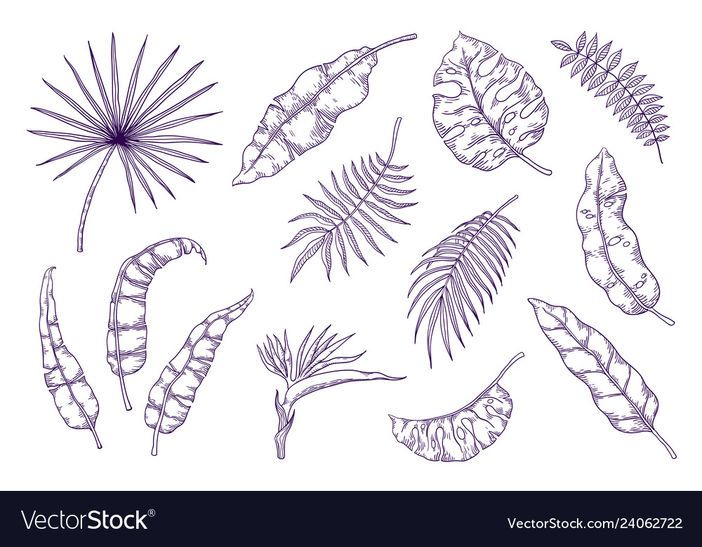 Hand Draw Palm Leaves Tropical Foliage Sketch Vector Image You can edit any of drawings via our online image editor before downloading. vectorstock