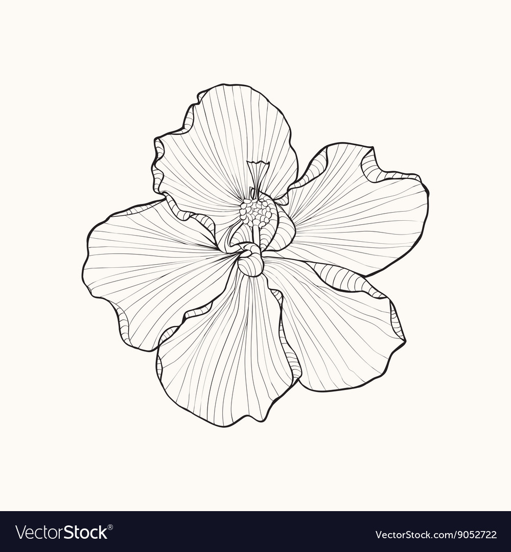 Hibiscus flower top view line pattern coloring boo hibiscus flower top view line pattern coloring boo vector image mightylinksfo