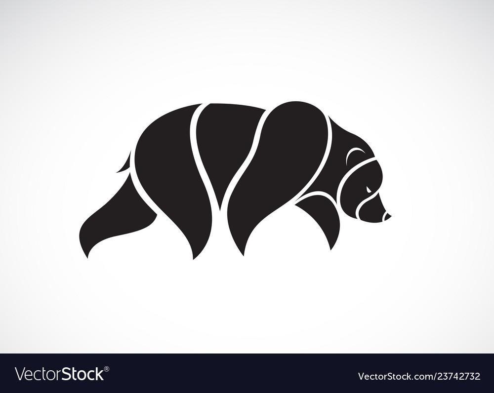 Bear design on white background wild animals bear
