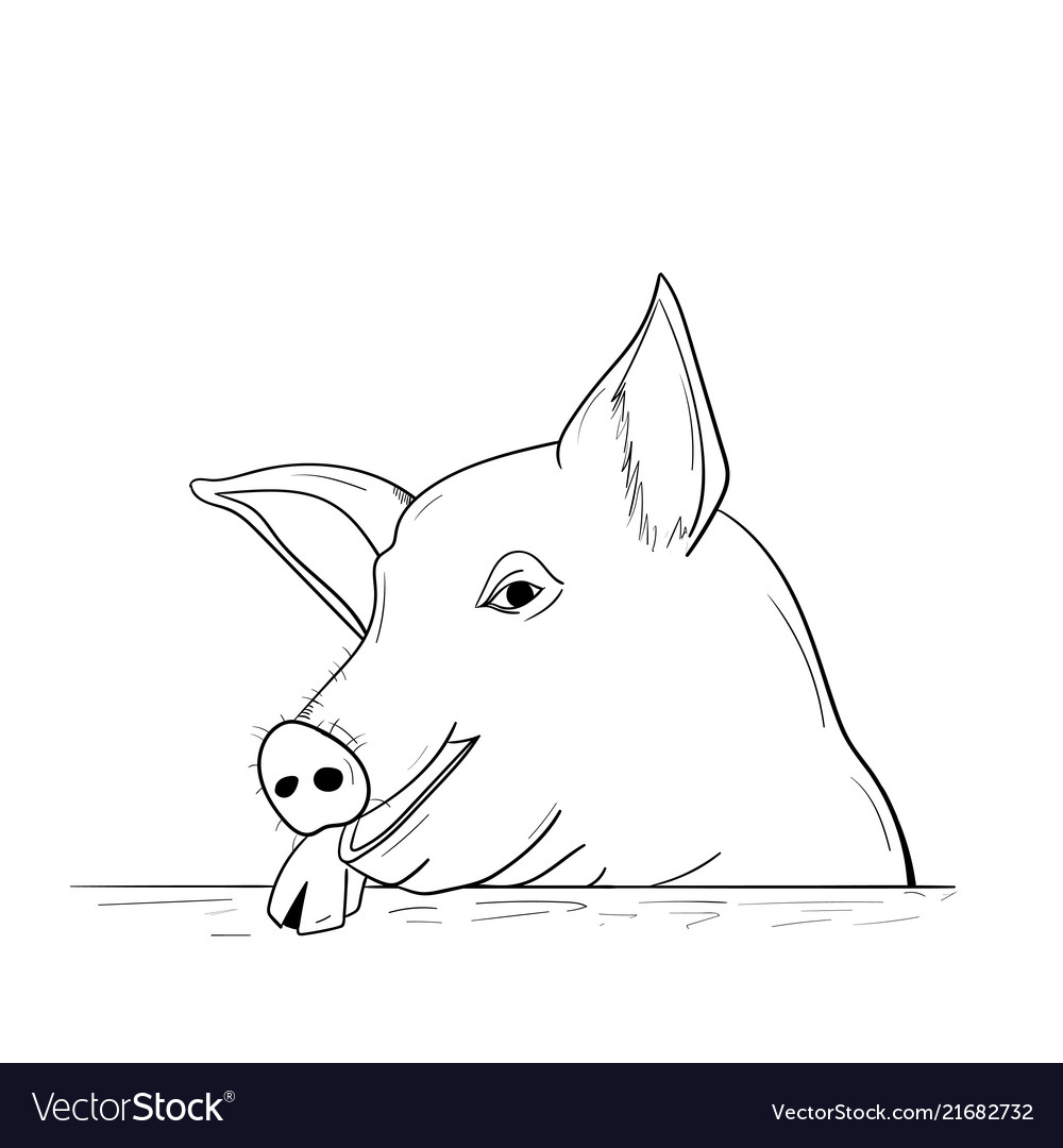 Chinese New Year Pig 2019 A Pig Sketch Royalty Free Vector