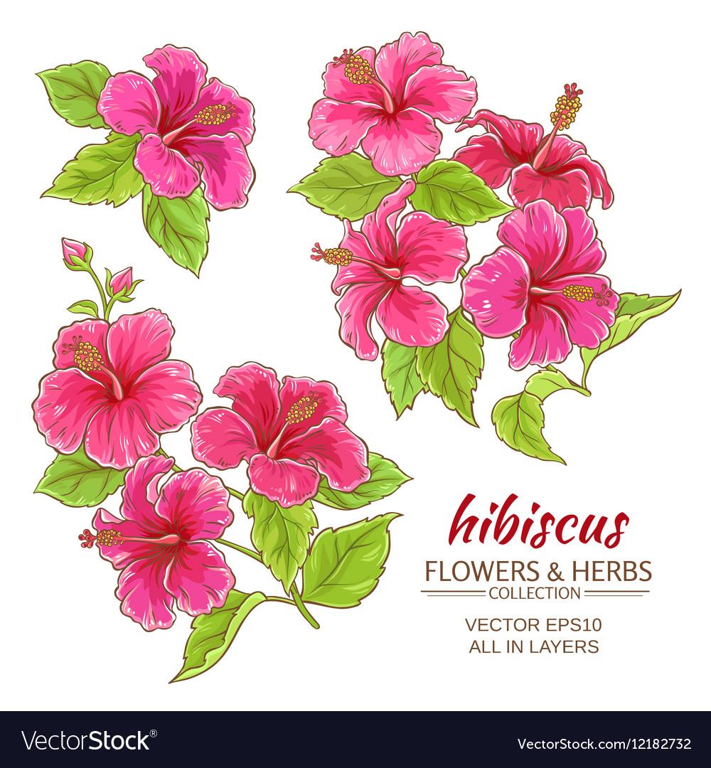 Hibiscus flowers set
