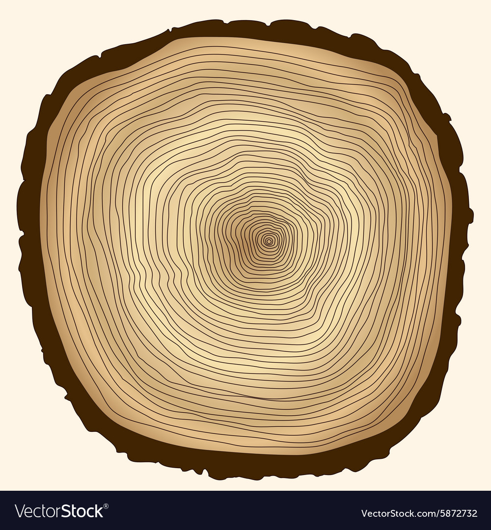 by log interpas isolated cutted stock photo trunk texture wooden tree wood rings white depositphotos on of