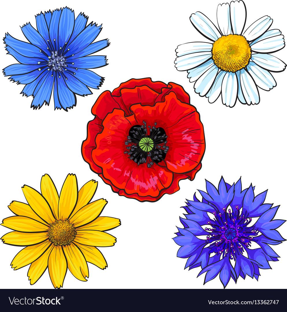 Set of wild field flowers - poppy chamomile