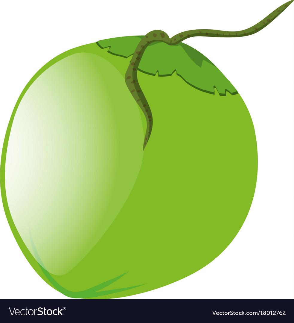 Green coconut vector