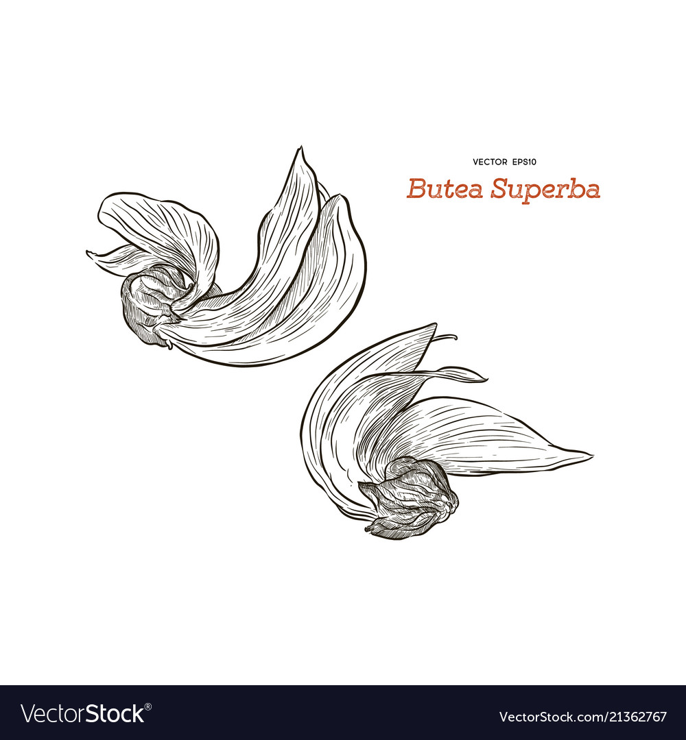 Butea monosperma or palash flower of southeast