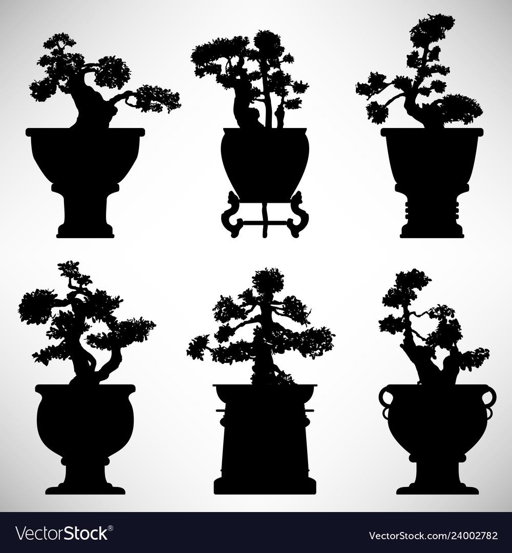 Bonsai tree plant flower pot a set of bonsai tree