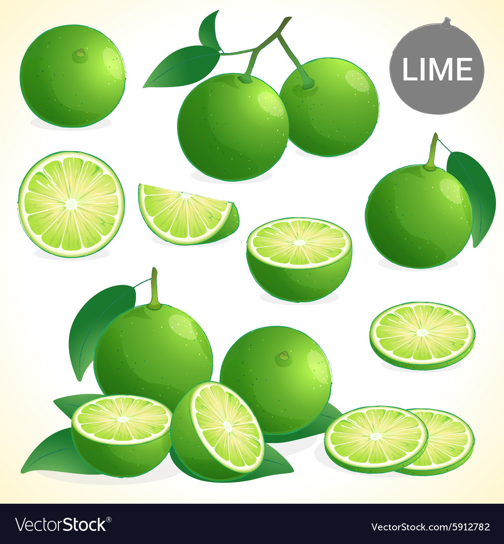 Set of green lime with leaf in various styles