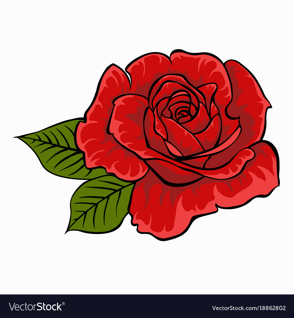 Red rose isolated flower on white background vector image mightylinksfo